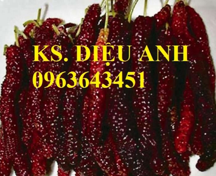 Cây giống dâu quả dài nhập khẩu Đài Loan chất lượng cao, giao cây toàn quốc