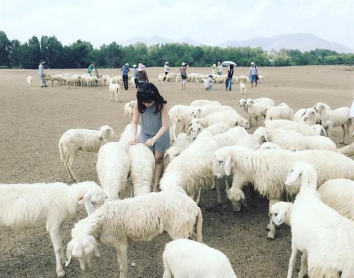 Tour nông trại cừu - vũng tàu