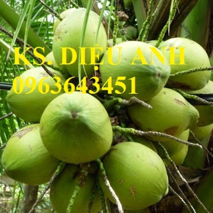 Bán cây giống dừa chuẩn F1, uy tín, giao cây toàn quốc