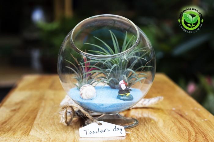 Terrarium quà tặng 20-110