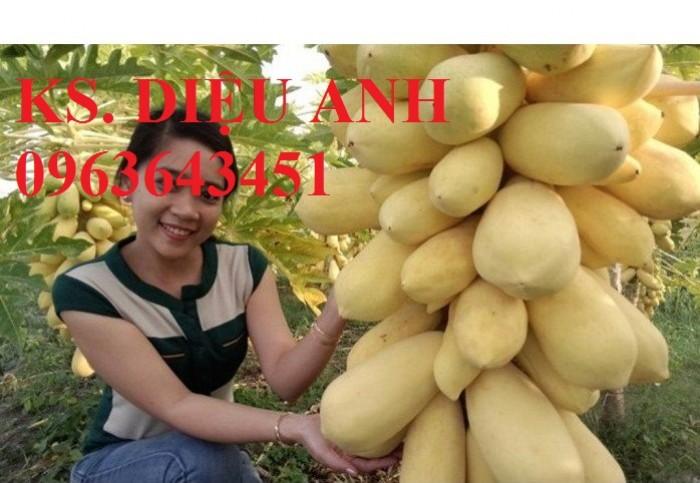 Chuyên cây giống, hạt giống đu đủ vàng lùn cao sản Thái Lan, chất lượng cao, giao hàng toàn quốc
