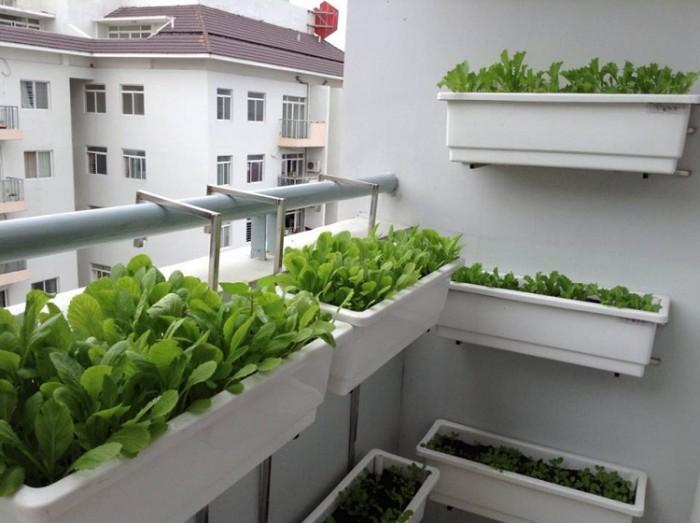 Giá trồng rau treo lan can