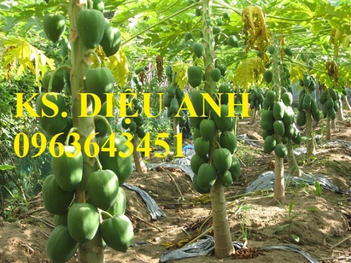 Bán cây giống, hạt giống đu đủ Đài Loan ruột đỏ, đu đủ hồng phi chuẩn giống, giao hàng toàn quốc