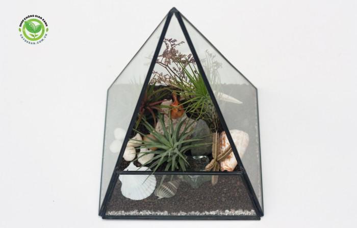 Kim tự tháp terrarium1