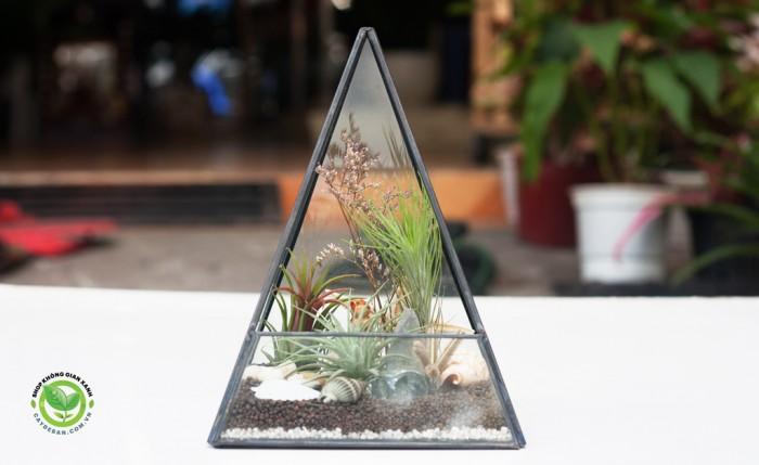 Kim tự tháp terrarium0