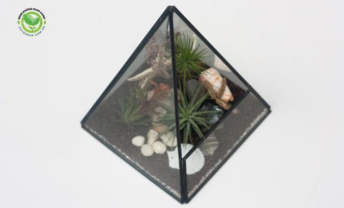 Kim tự tháp terrarium2
