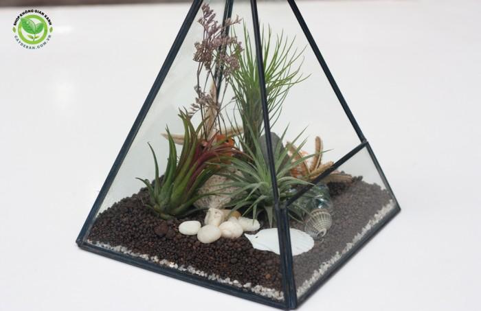 Kim tự tháp terrarium3