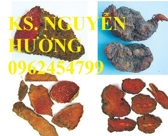Bán Giống cây Hà Thủ Ô Đỏ số lượng lớn và sản phẩm Củ Hà Thủ Ô Đỏ