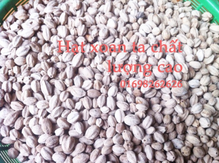 hạt xoan ta giống chất lượng cao  - bán hạt giống lâm nghiệp