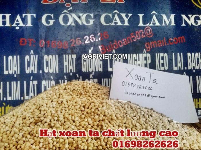 hạt xoan ta giống 01698262626 - bán hạt giống lâm nghiệp
