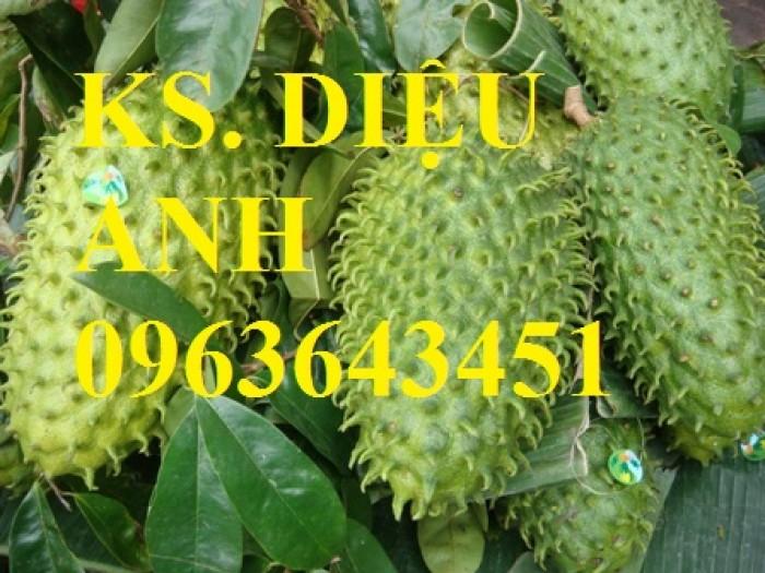 Bán cây giống mãng cầu xiêm chuẩn F1, chất lượng cao, giao cây toàn quốc.