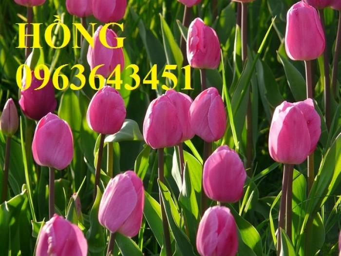 Sỉ, lẻ củ giống: Hoa ly lùn, hoa tuylip, hoa tiên ông, bao hàng chuẩn