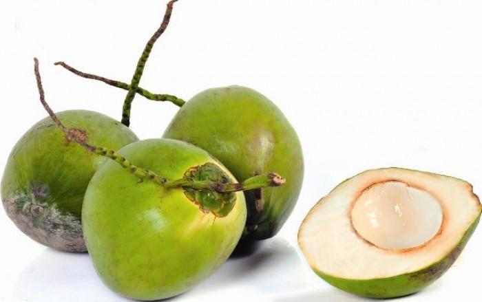 Cây giống dừa xiêm lùn chuẩn giống, chất lượng cao
