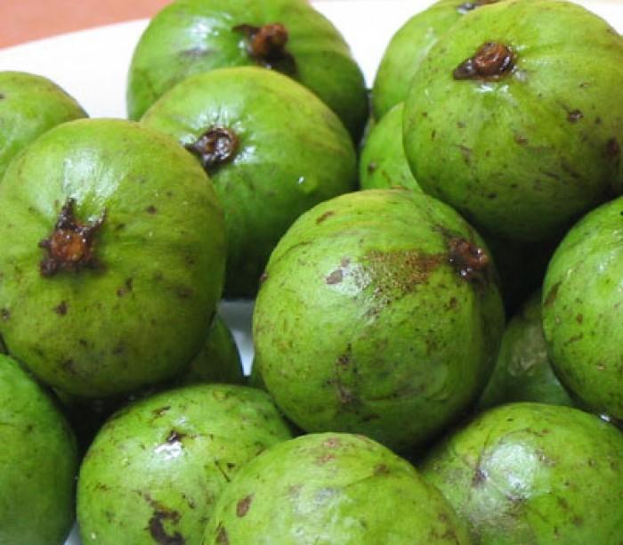 Cây giống sấu ghép, sấu hạt chuẩn giống, chất lượng cao, giao cây toàn quốc