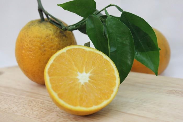 Chuyên cây giống cam vinh chuẩn giống, chất lượng cao, giao cây toàn quốc