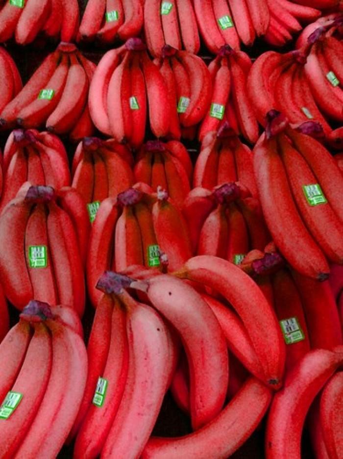 Cây giống chuối đỏ Đăcca nuối cấy mô chuẩn giống, chất lượng cao