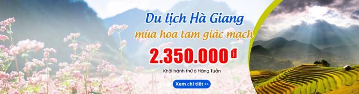 Đi Hà Giang ngắm hoa quên sâu