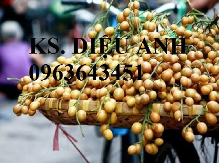 Cây giống quất hồng bì chuẩn giống, chất lượng cao, giao cây toàn quốc