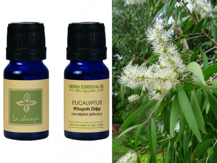 Tinh dầu Khuynh Diệp Eucalyptus Globulus Oil - MSN181064