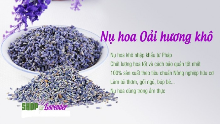 Hoa lavender provence_pháp10