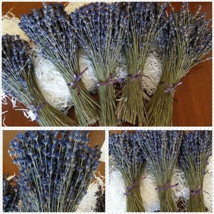 Hoa lavender provence_pháp12