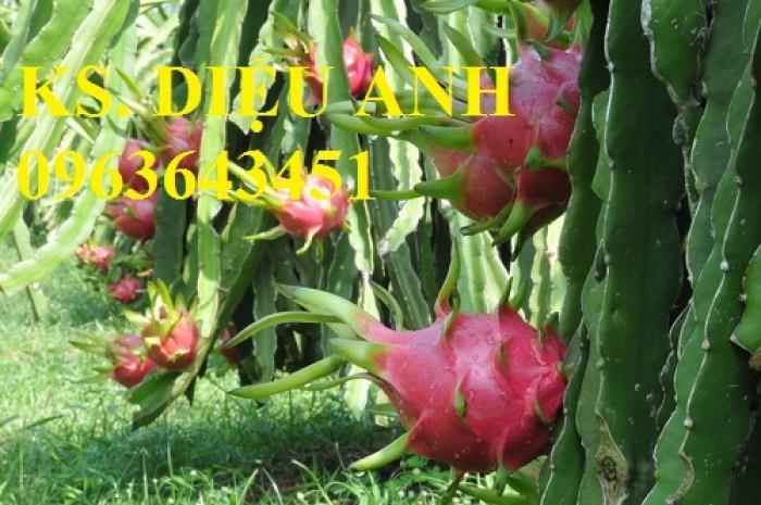 Cây giống na thái lan, thanh long ruột đỏ,vú sữa lò rèn,quất hồng bì,roi thái đỏ.Giao cây toàn quốc