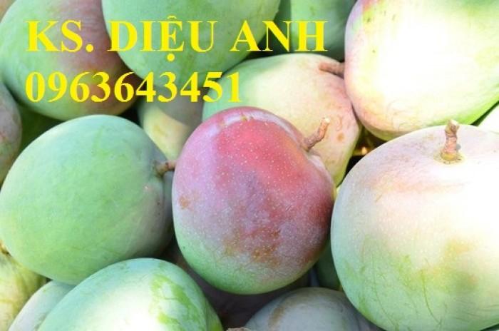 Bán cây giống xoài: Xoài Thái Lan, xoài Úc, xoài tím,xoài Đài Loan quả to,chuẩn giống,giao cây toàn quốc