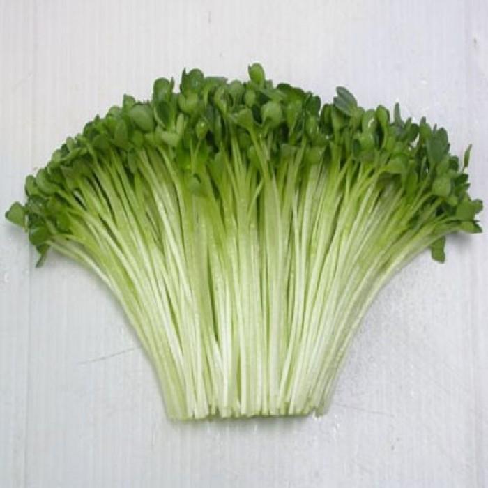 rau mầm súp lơ xanh