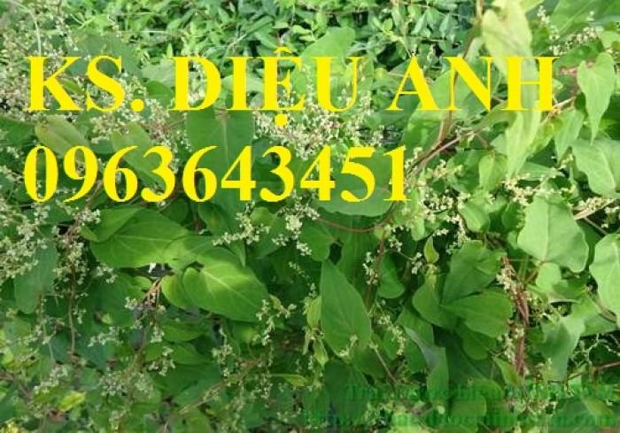 Cây giống, hạt giống dược liệu: Đẳng sâm, đương quy, hà thủ ô, gấc nếp, hoa hòe với số lượng lớn.