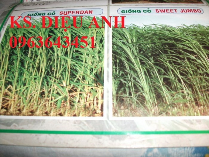 Hạt giống, hom giống cỏ chăn nuôi: cỏ VA06, cỏ Ghi nê, cỏ sả, cỏ sweet jumbo, cam kết chuẩn giống