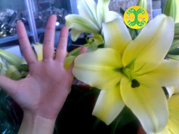 Kích thước hoa nở0