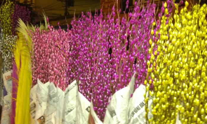 Bán sỉ, bán buôn hoa tầm xuân số lượng lớn1
