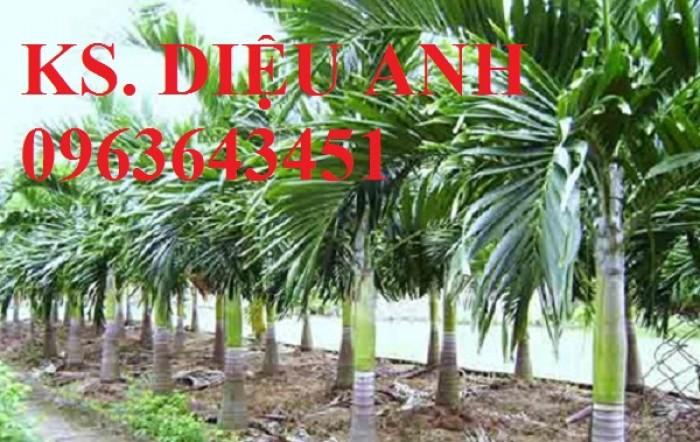 Cây giống, cây choai, cây trưởng thành cau tứ quý, cau lù, đảm bảo chuẩn giống, giao cây toàn quốc