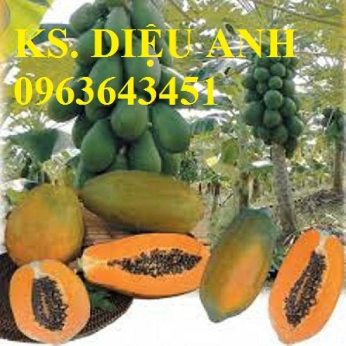 Cây giống, hạt giống đu đủ: đu đủ lùn cao sản Thái Lan, đu đủ lùn da vàng, đu đủ hồng phi Đài Loan F1
