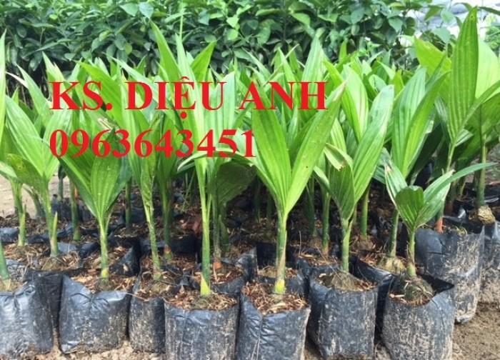 Cây giống, cây choai, cây trưởng thành các loại cau: cau lùn, cau tứ quý, cau lai, giao cây toàn qốc