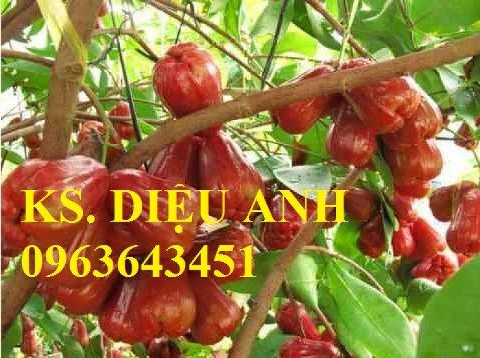 Giống cây roi thái đỏ, cam kết chuẩn giống, giao cây toàn quốc3