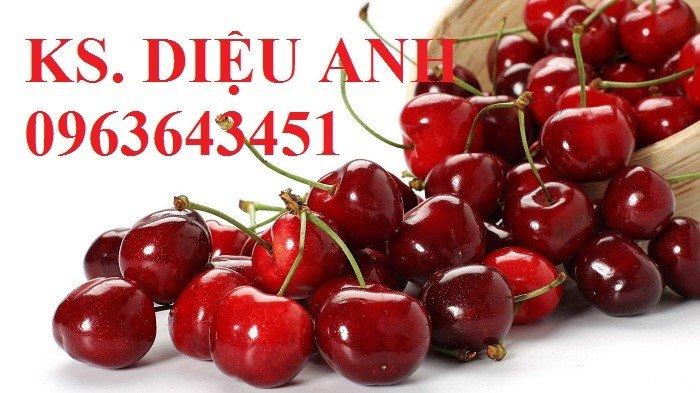 Cây giống cherry, cam kết chuẩn giống, giao cây toàn quốc2