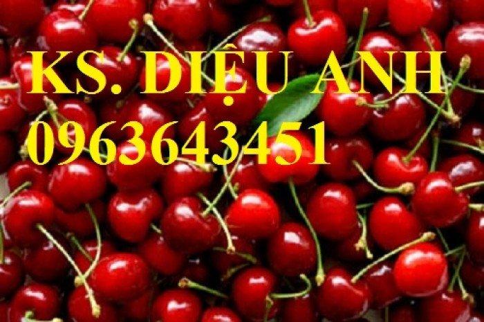 Cây giống cherry, cam kết chuẩn giống, giao cây toàn quốc7