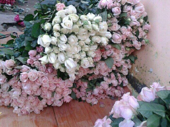 Sỉ hoa hồng cắt cành Đà lạt2