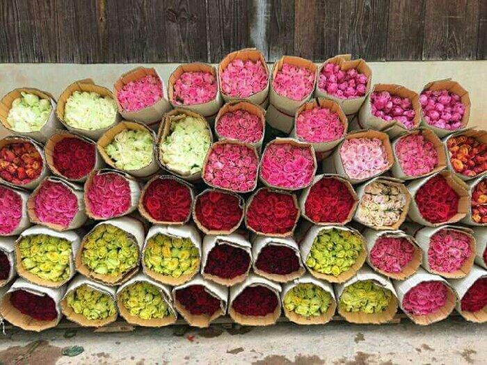 Sỉ hoa hồng cắt cành Đà lạt1