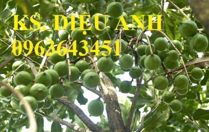 Chuyên cung cấp cây giống mắcca, cam kết chuẩn giống, giao cây toàn quốc.0