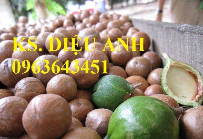 Chuyên cung cấp cây giống mắcca, cam kết chuẩn giống, giao cây toàn quốc.2