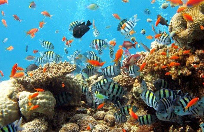 Khám phá Đảo Bình Ba hoang sơ + bửa ăn hải sản chỉ với 590.000vnđ/Khách !