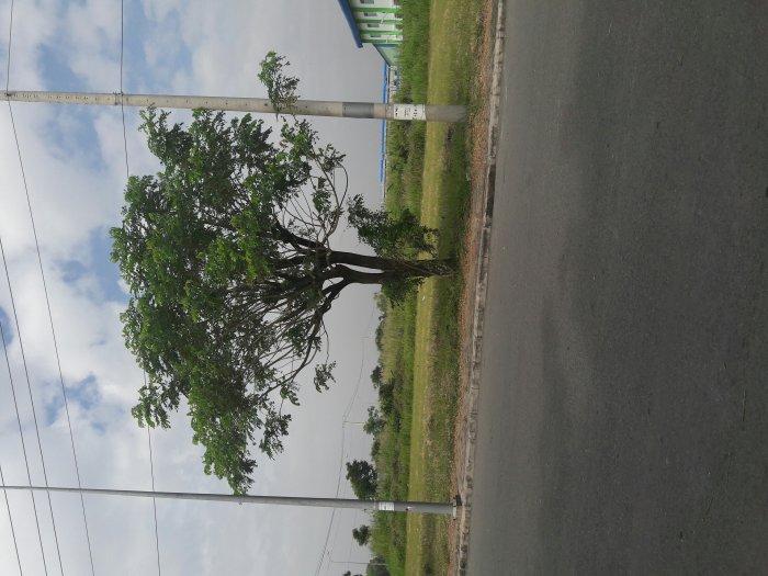Đất thổ cư 85m Nguyên Văn Tạo  Nhà bè.
