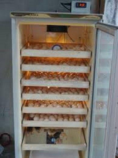 Chuyên cung cấp máy ấp trứng, máy ấp trứng công nghiệp, máy ấp trứng mini, máy ấp trứng1