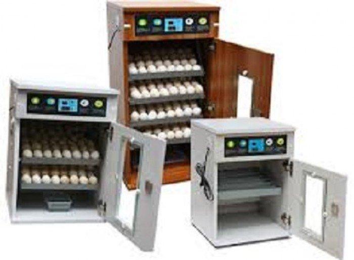 Chuyên cung cấp máy ấp trứng, máy ấp trứng công nghiệp, máy ấp trứng mini, máy ấp trứng4