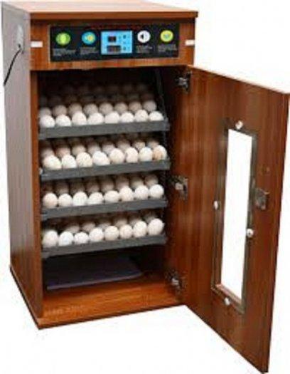 Chuyên cung cấp máy ấp trứng, máy ấp trứng công nghiệp, máy ấp trứng mini, máy ấp trứng5