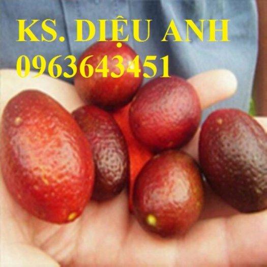 Chuyên cung cấp cây giống chanh nhập khẩu: chanh ngón tay, chanh máu, chanh ruột đỏ, cam máu.1