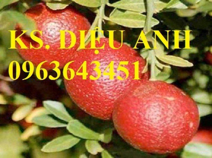 Chuyên cung cấp cây giống chanh nhập khẩu: chanh ngón tay, chanh máu, chanh ruột đỏ, cam máu.2
