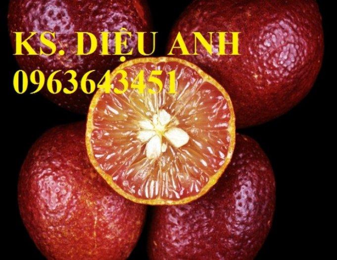 Chuyên cung cấp cây giống chanh nhập khẩu: chanh ngón tay, chanh máu, chanh ruột đỏ, cam máu.3